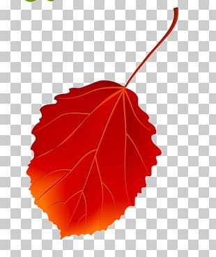 European Aspen Autumn Leaves Maple Leaf PNG