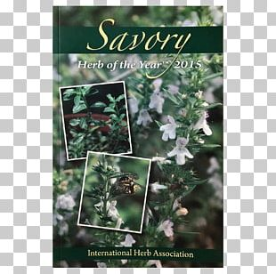The International Herb Tarragon Common Wormwood Elderberry PNG