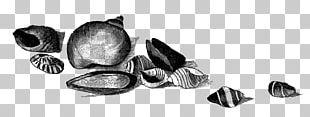 Seashell Work Of Art Drawing PNG