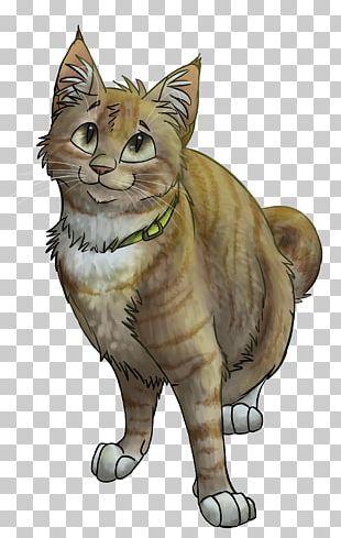 Tabby Cat Wildcat Kitten Drawing PNG