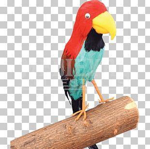 Cuisine Of Hawaii Parrot Luau Piracy PNG