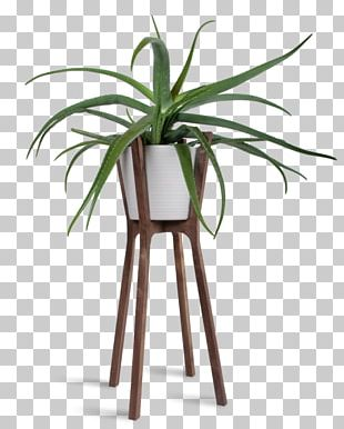 Woody Plant Flowerpot Table Houseplant PNG