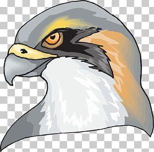Hawk Eagle PNG