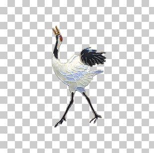 Water Bird Galliformes Beak Feather PNG