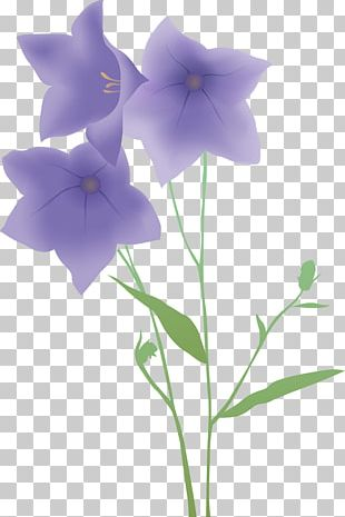 Cowbell Flower PNG
