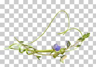 Floral Design Twig Plant Stem Leaf Petal PNG