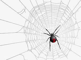 Halloween Spider Web Spider PNG