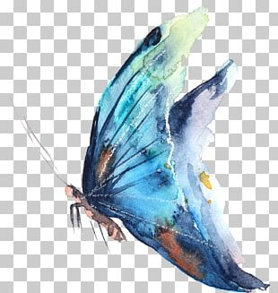 Butterfly Watercolor Painting Photography PNG
