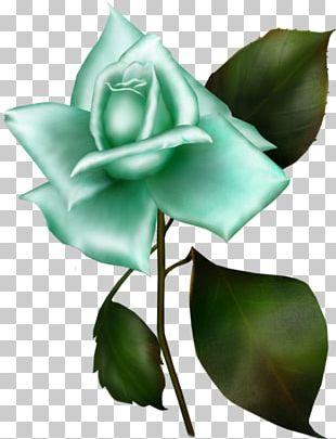 Garden Roses Gwen Tennyson Gwen 10 Portable Network Graphics PNG