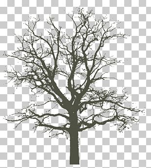 [An Oak Tree In Winter] 1840s Photography PNG