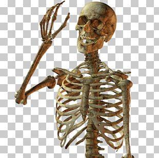 Calavera Skull Human Skeleton PNG
