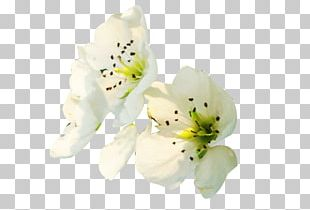 Petal Floral Design Flower Computer File PNG