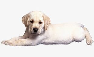 Sad Puppy PNG