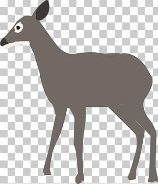 White-tailed Deer Elk Antelope PNG