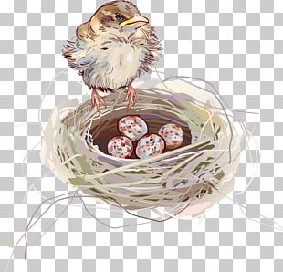 Edible Birds Nest Swallow PNG