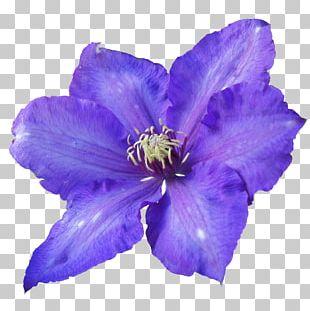 Flower Violet Purple Petal PNG