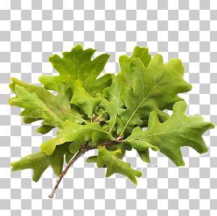 Watercolor Leaves Leaf Vegetable Food PNG