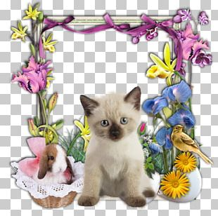 Colomba Di Pasqua Easter Bunny Kitten Easter Vigil PNG