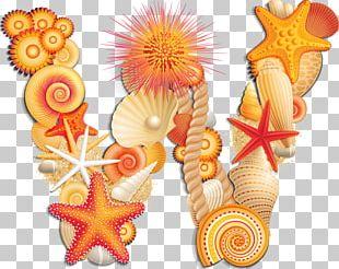 Seashell Letter Alphabet J W PNG