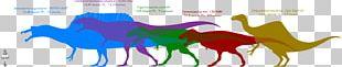 Dinosaur Size Giganotosaurus Carcharodontosaurus Velociraptor Megaraptor PNG