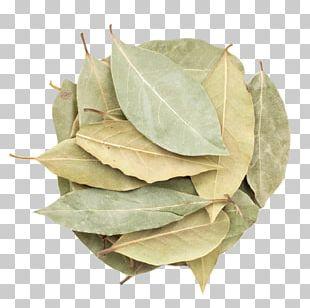 Bay Laurel Indian Cuisine Spice Bay Leaf Herb PNG