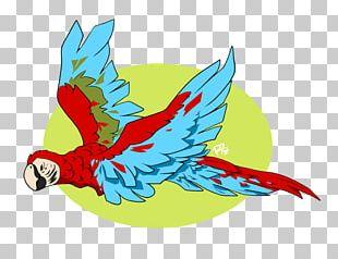 Macaw Parrot Beak PNG