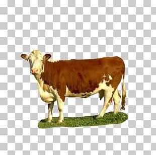Goat Qurbani Dairy Cattle Baka Islam PNG, Clipart, Allah