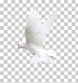 Bird Flight Owl Beak PNG