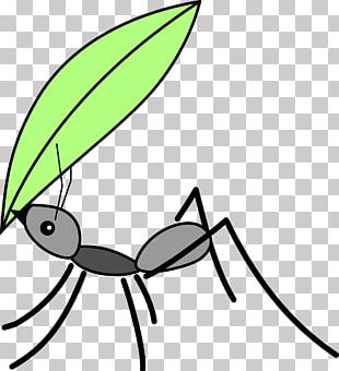 Black Garden Ant Insect Drawing PNG