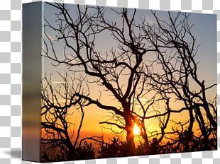 Stock Photography Desktop Wood /m/083vt PNG