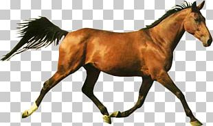 Horse Racing Shergar Web Browser PNG