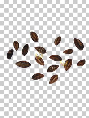 Erythroxylum Coca Seed Smart Shop Herb Head Shop PNG