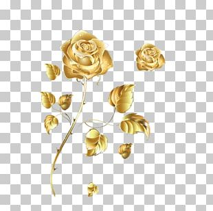 Beach Rose Golden Rose Color PNG