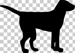 Labrador Retriever Black Dog Puppy PNG