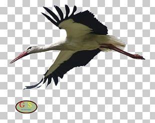 White Stork Bird Otterhound PNG