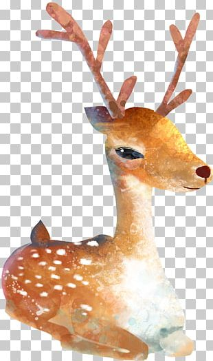 Sika Deer Watercolor Painting Cartoon Illustration PNG