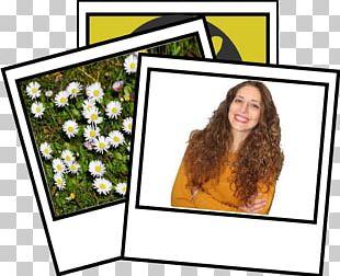 Floral Design Frames Cut Flowers Pattern PNG