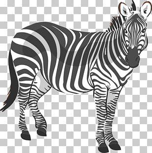 Zebra CorelDRAW Stock Illustration Computer File PNG