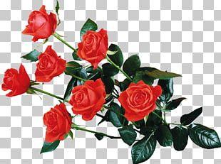 Flower Rose Desktop PNG