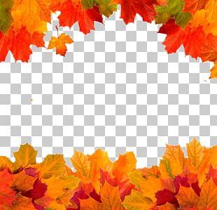 Autumn Leaves Golden Autumn Owasso Leaf PNG