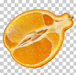 Tangelo Vegetarian Cuisine Valencia Orange Peel PNG