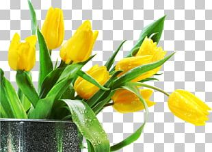 Artificial Flower Tulip Desktop PNG