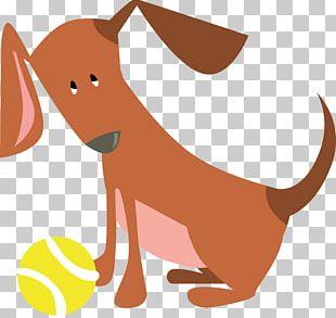 Cat Dog Mammal Canidae Macropodidae PNG