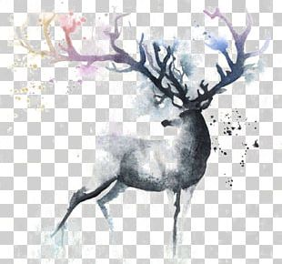 Deer Watercolor Painting Out Of The Cot Art PNG