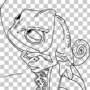 Chameleons Coloring Book Rapunzel Drawing Eidechse PNG