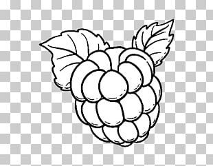 Drawing Red Raspberry Coloring Book Painting PNG