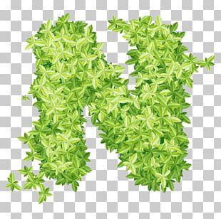 Leaf Xd1 PNG