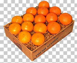 Blood Orange Tangerine Clementine Mandarin Orange Tangelo PNG