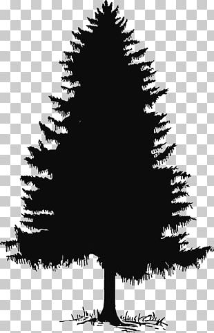 Evergreen Tree Pine Silhouette PNG