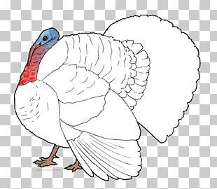 Turkey Meat Chicken As Food Bird PNG